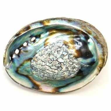 Goedkope abalone schelp smudgen salie