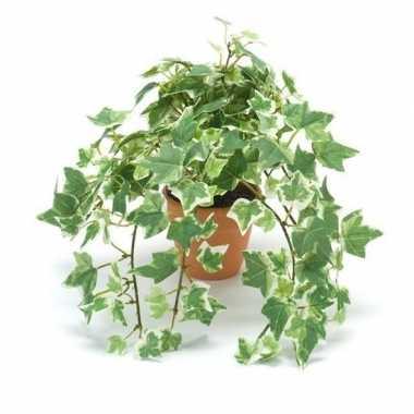 Goedkope kantoor kunstplant klimop groen/wit terracotta pot