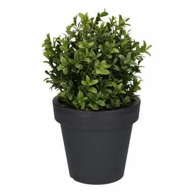 Goedkope kunst buxus plant antraciet pot