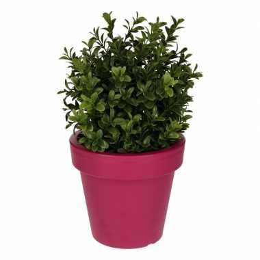 Goedkope kunst buxus plant fuchsia pot