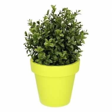 Goedkope kunst buxus plant lime pot