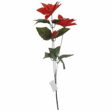 Goedkope rode kerstster bloem