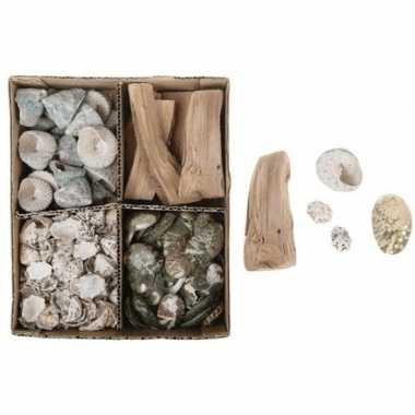 Goedkope schelpen mix box naturel