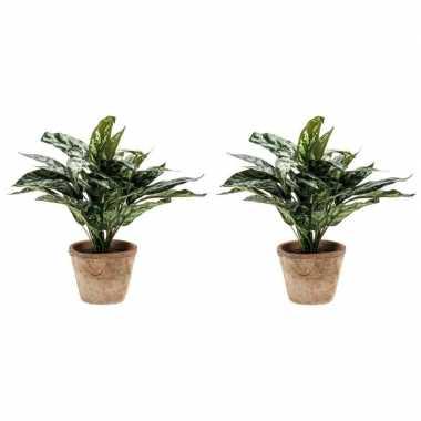 Goedkope x groene aglaonema/aronskelk kunstplanten pot