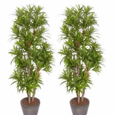 Goedkope x groene dracaena reflexa kunstplanten binnen