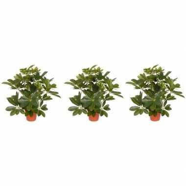 Goedkope x groene schefflera/baby struik kunstplanten binnen