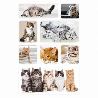 Goedkope x poezen/katten/kittens dieren stickers