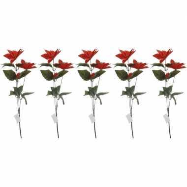 Goedkope x rode kerstster bloem