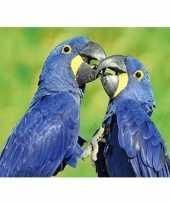 Goedkope dieren magneet d ara papegaai