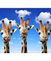 Goedkope dieren magneet d giraffes
