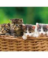 Goedkope dieren magneet d kittens mand