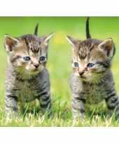 Goedkope dieren magneet d kittens