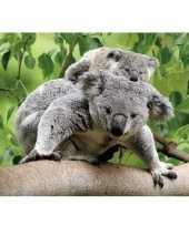 Goedkope dieren magneet d koalaberen