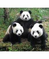 Goedkope dieren magneet d panda familie