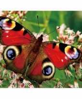 Goedkope dieren magneet d pauwoog vlinder