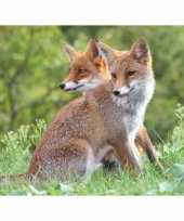 Goedkope dieren magneet d rode vossen