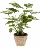 Goedkope kantoor kunstplant anthurium groen pot