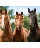 Goedkope placemat drie paarden d