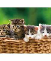 Goedkope placemat kittens d