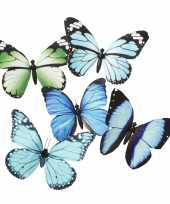 Goedkope vlinder magneet blauw groen