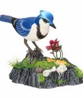 Goedkope wonderbird model a