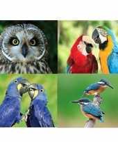 Goedkope x dieren magneten vogels