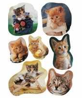 Goedkope x katten poezen dieren stickers