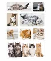 Goedkope x poezen katten kittens dieren stickers 10139707