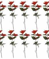 Goedkope x rode kerstster bloem 10159164